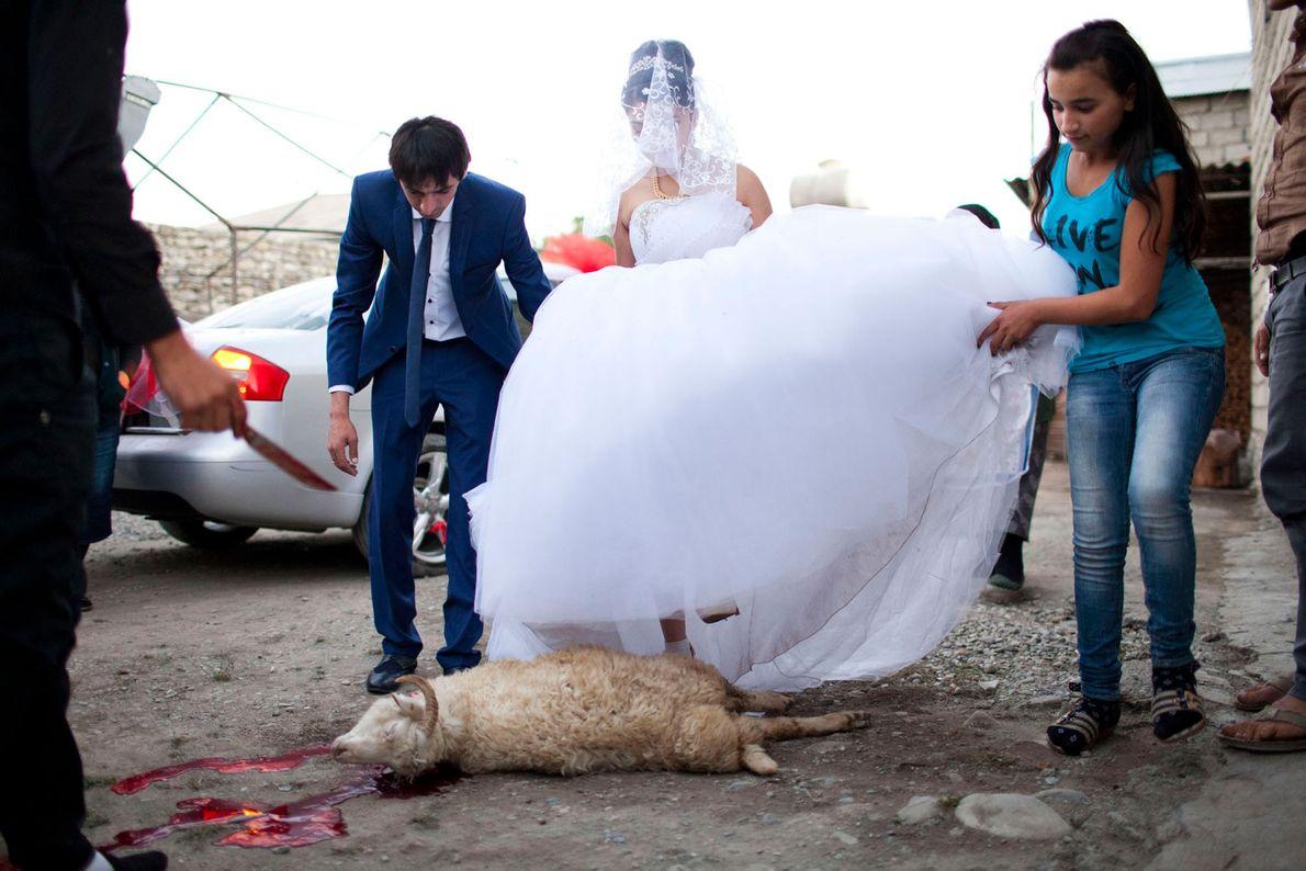 Foto von Braut und Bräutigam, die über ein totes Schaf steigen