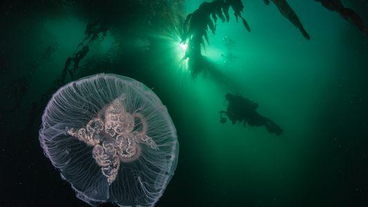 Galerie: Neue Meeresschutzgebiete von der doppelten Größe Deutschlands etabliert