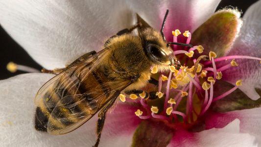 Ohne Insekten könnte die Menschheit aussterben