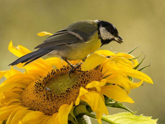 10 hilfreiche Pflanzen für Singvögel