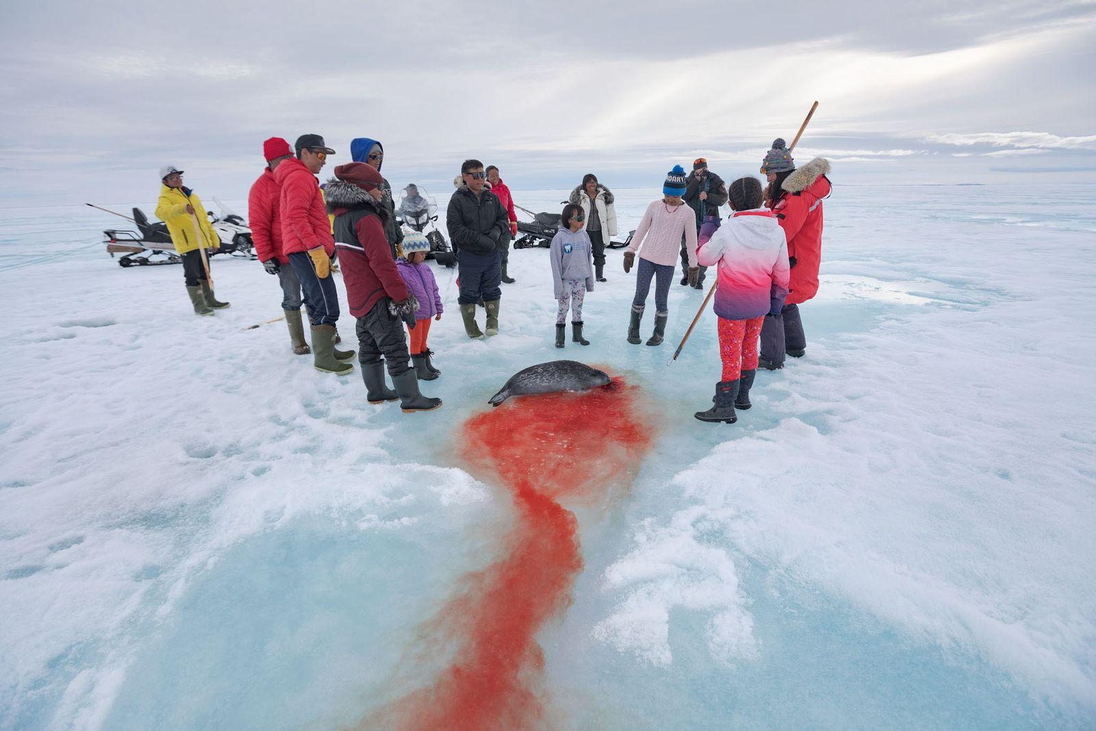 Eine Blutspur führt zur Familie Naqitarvik, die eine junge Frau zu ihrer ersten erlegten Ringelrobbe gratuliert.