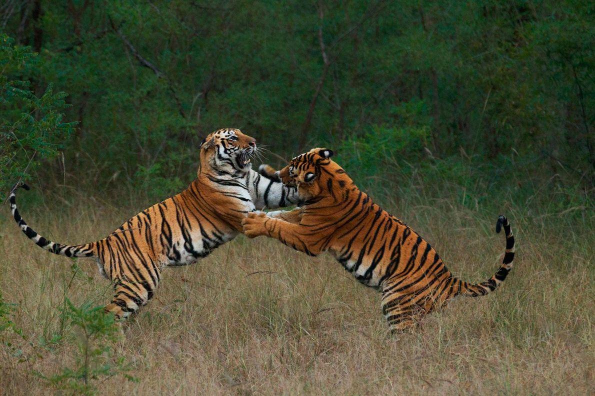 Geschwisterpaar beim spielerischen Kampf