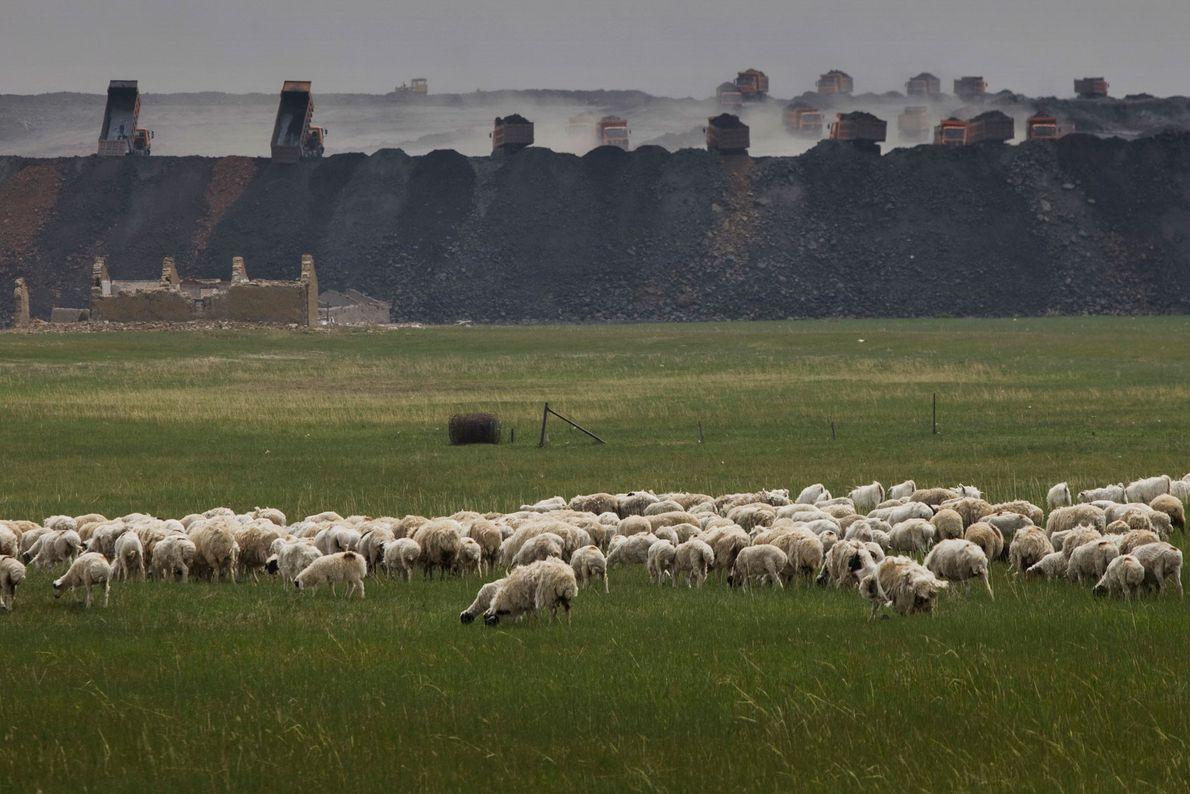 Vor der Shenhua-Mine grasen Schafe. In der Mine werden Sand und Steine abtransportiert, um den Bergbau ...