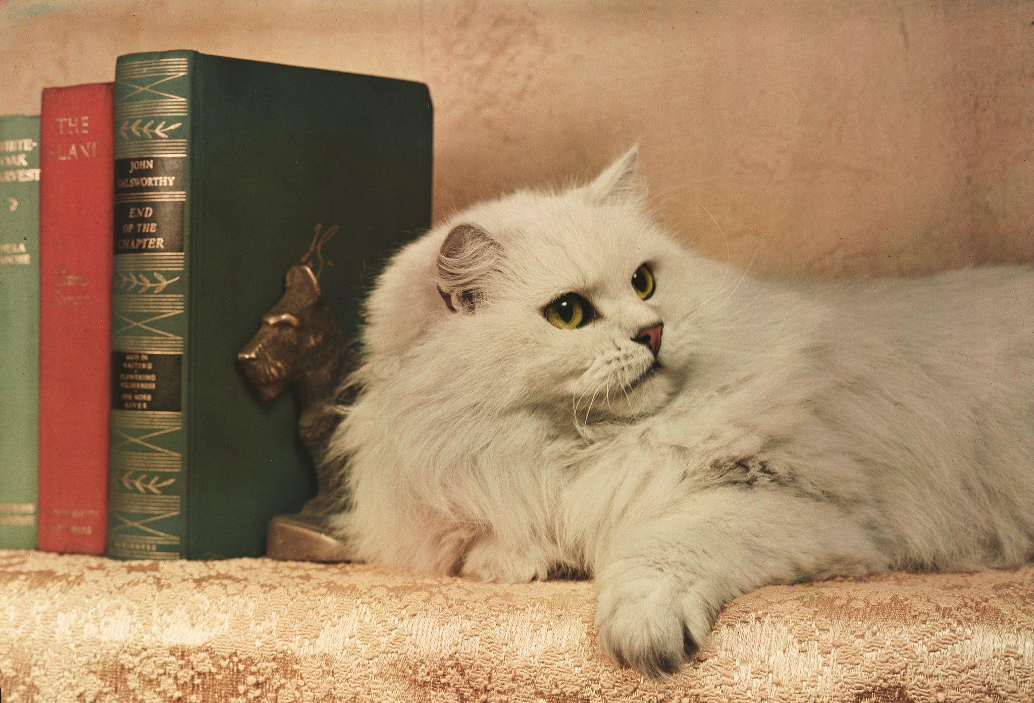 Vintage-Fotos von verwöhnten Katzen | National Geographic