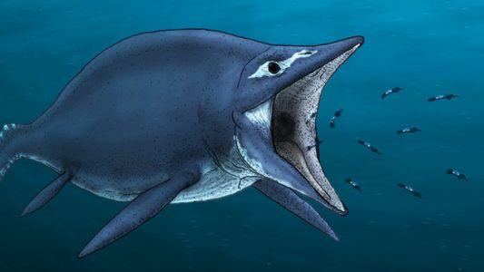 Wissen kompakt: Ichthyosaurier