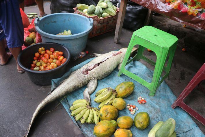 Der aufgeschnittene Kadaver eines Kaimans (links) liegt im August 2021 neben Obst und Gemüse auf dem ...
