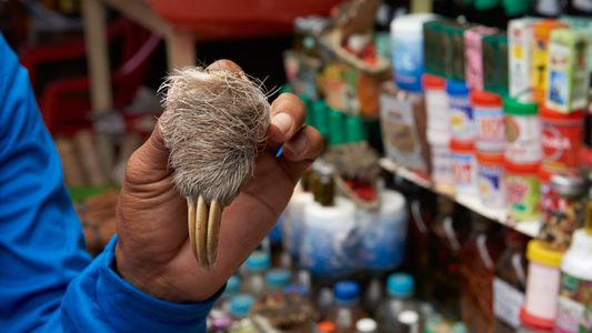 Wildtiere zum Verkauf: Der berüchtigte Belén-Markt in Peru ist wieder im Geschäft