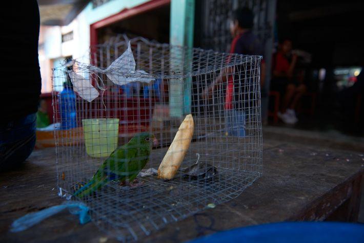 Ein Sittich und eine Terekay-Schienenschildkröte warten in einem Drahtkäfig darauf, als Haustiere verkauft zu werden.