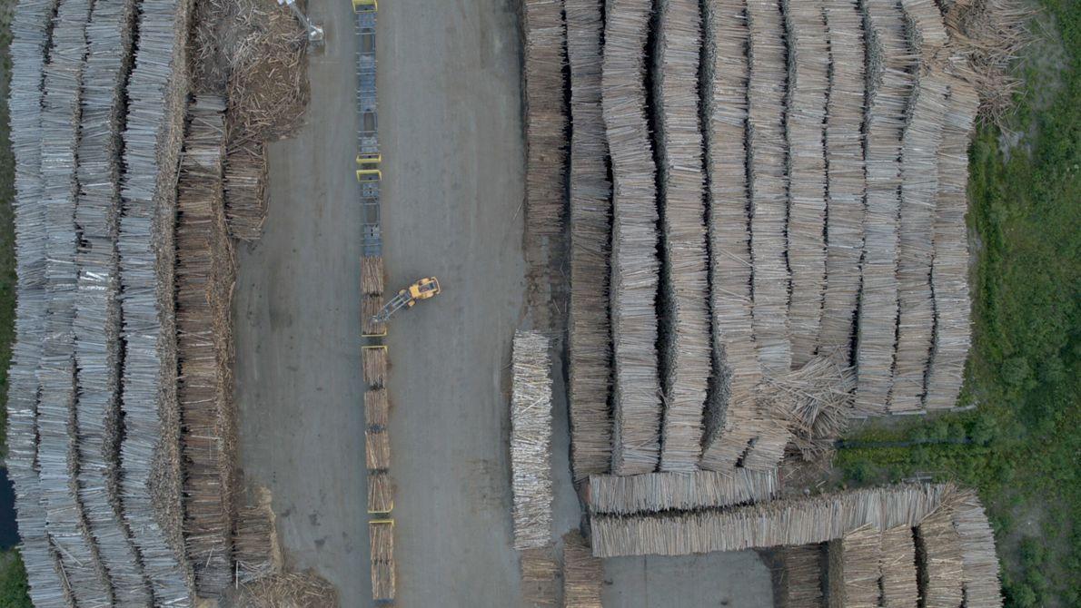 Schweden: Der Blick auf einen Holzplatz offenbart eine neue Perspektive. Als drittgrößter Holzexporteur sind 70 % ...