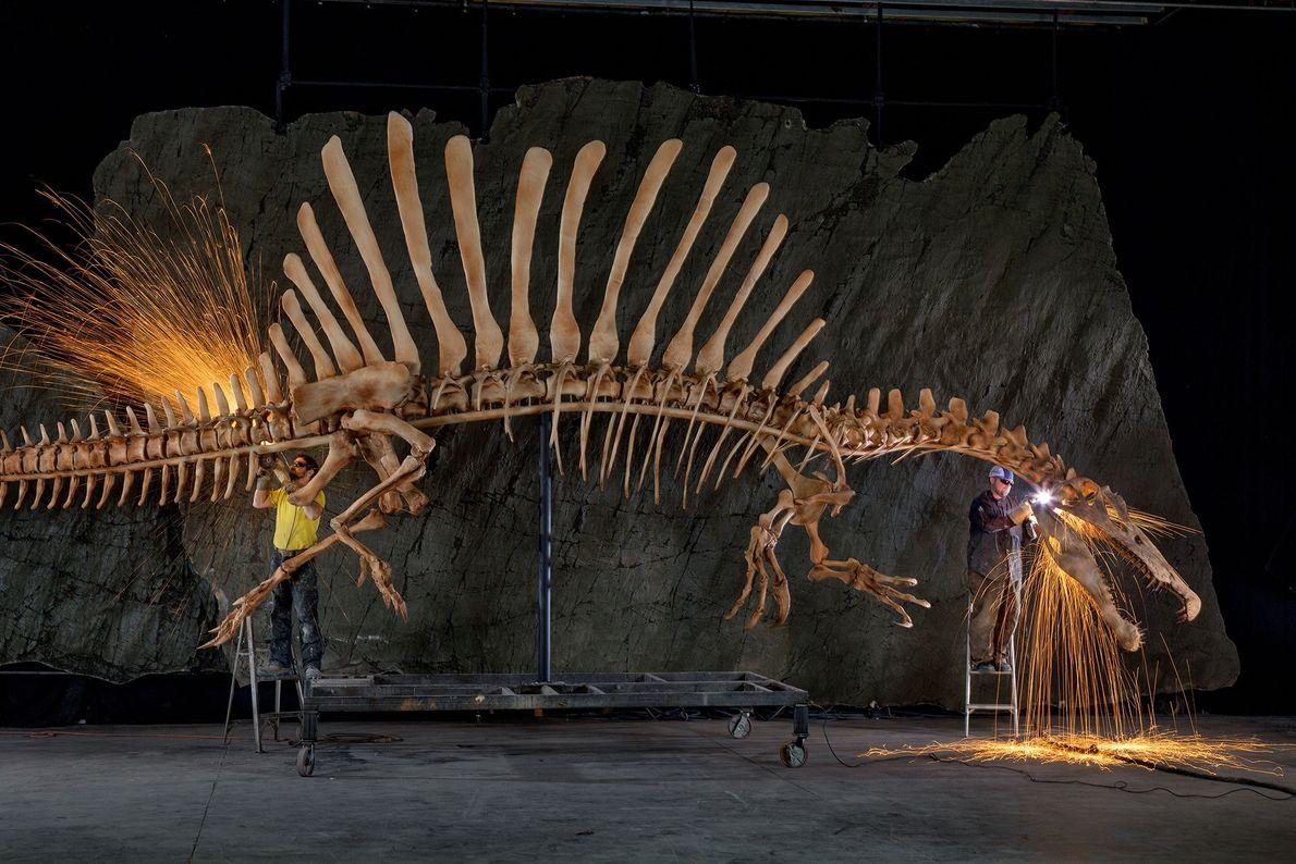Ausstellungsmitarbeiter verrichten die letzten Arbeiten an einer anatomisch korrekten und lebensgroßen Rekonstruktion eines Spinosaurus aegypticus, dessen ...