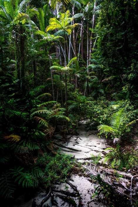 Bach auf Fraser Island