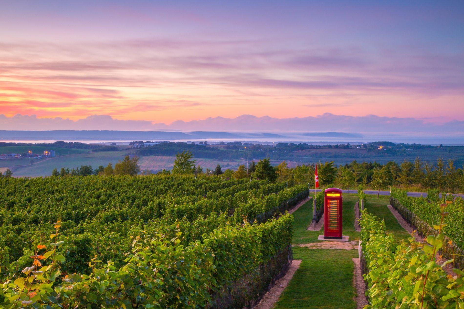 Die Luckett Vineyards in Wolfville produzieren nicht nur auserlesene Weine. In der authentischen englischen Telefonzelle mitten ...