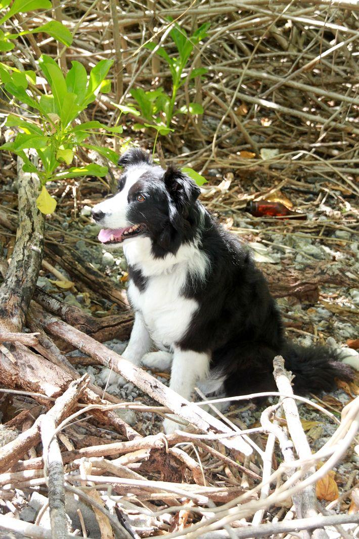 Spürhund Kayle