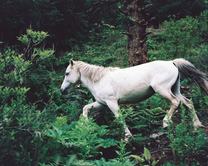 A white horse trots through a remote settlement. While photographing the country, Jazbec rarely saw animals ...