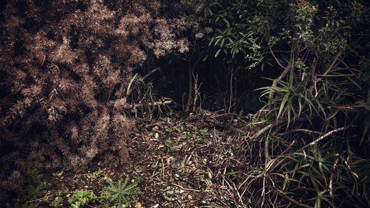Die Magie des Waldbadens