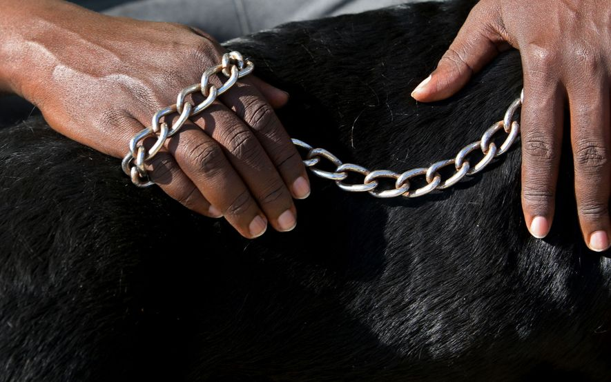 Der 41-jährige David Kamanda hat drei Hunde: einen Deutschen Schäferhund namens Cookie und die beiden Rottweiler ...