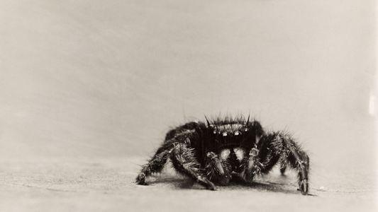 Vintage-Krabbler: Frühe Makroaufnahmen von Insekten & Spinnen