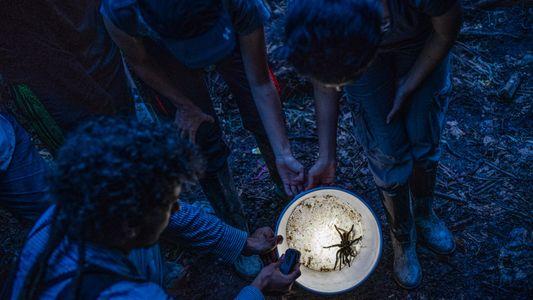 """Galerie: Erste Expeditionen Kolumbiens """"Biodiversitätswunder"""""""