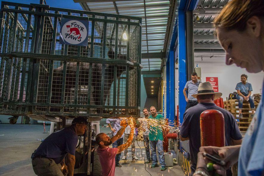 Die Tiere wurden von der Türkei aus in den Jordan geflogen – aber einige ihrer Käfige ...