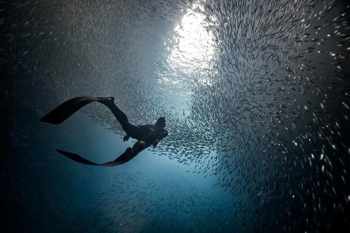 Schwalbenhöhle in Tonga