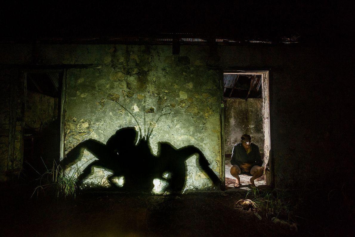 Der Palmendieb, der größte Gliederfüßer der Welt, besitzt eine Beinspannweite von fast einem Meter. Dieser hier ...