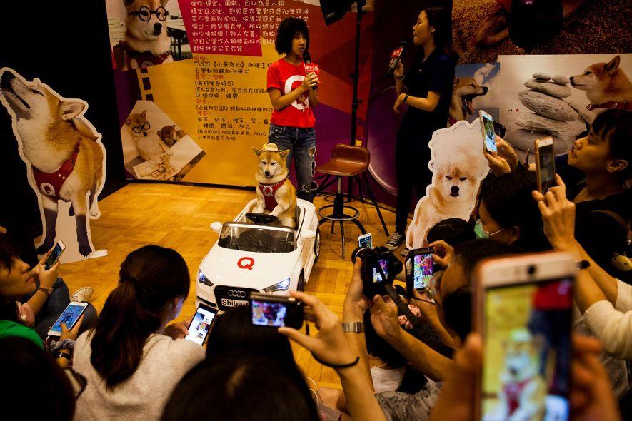 Q Jiang ist ein berühmter Livestreamer – und ein Hund. Bei einem Meet and Greet in ...