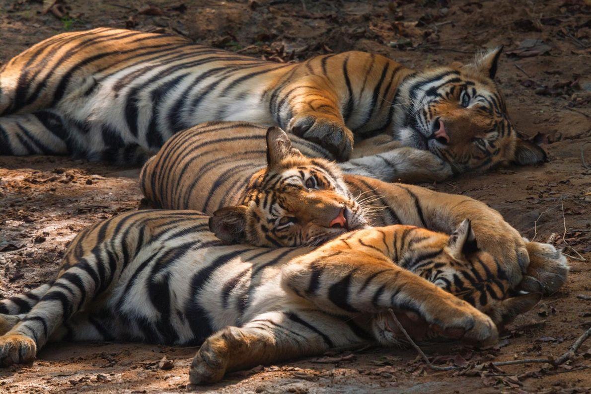 Schlafende Jungtiere