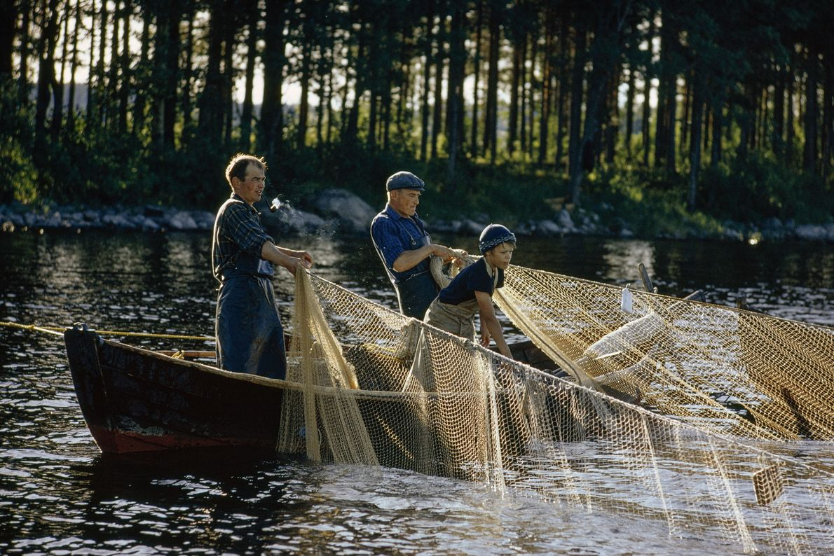 Auf einem See im finnischen Kallavesi holen Männer aus drei Generationen einer Familie ein selbstgemachtes Fischernetz ...