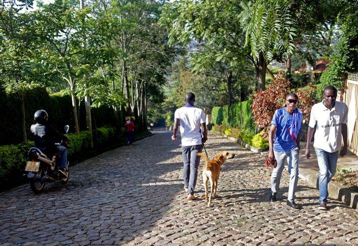 Ngabo Faradji geht mit Nelson auf einer Straße in Kigali spazieren und holt dabei andere Besitzer ...