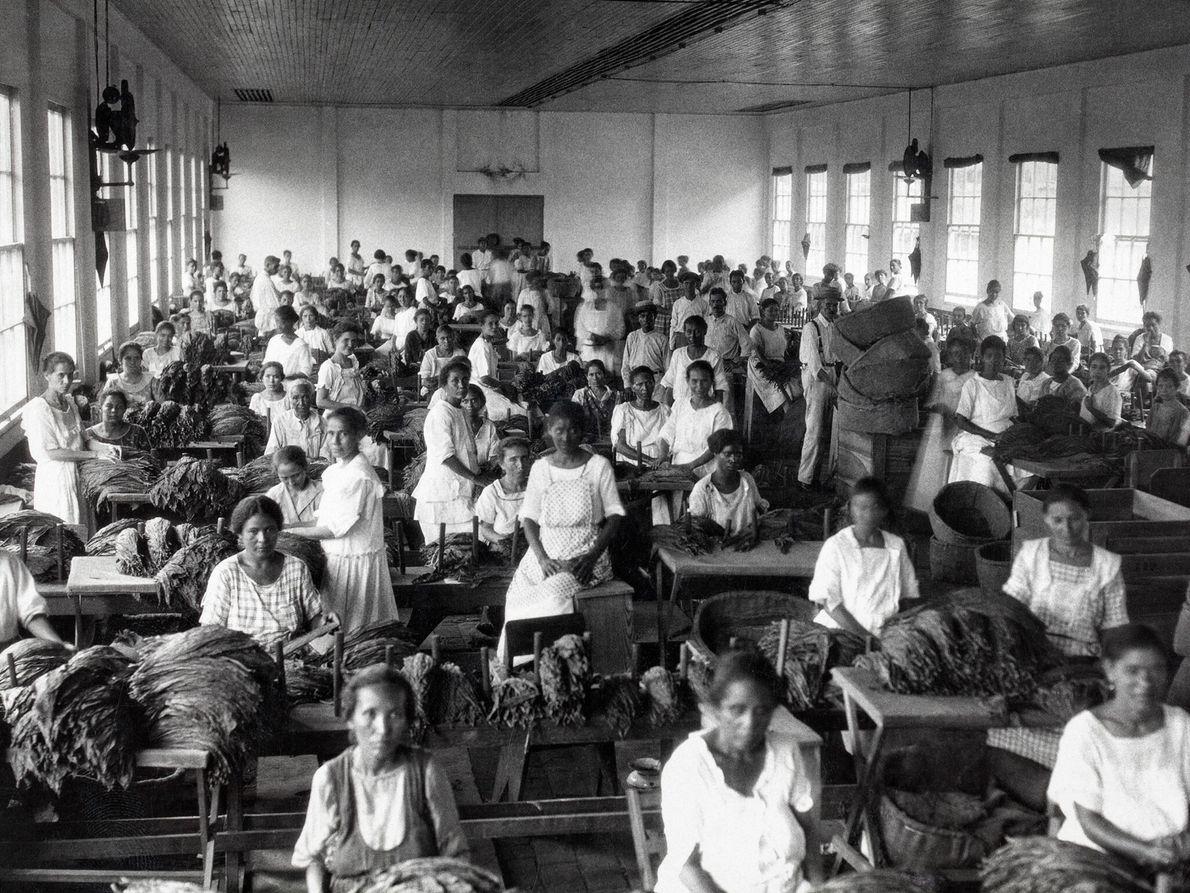 Dutzende von Frauen sortieren Tabak in einem Arbeitsraum in Caguas. Eine Reihe von Zigarettenfirmen, darunter mehrere ...