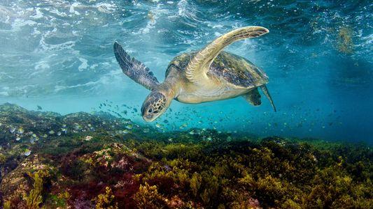 Das Leben unter dem Meer