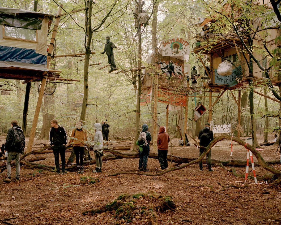 Baumhäuser im Wald.