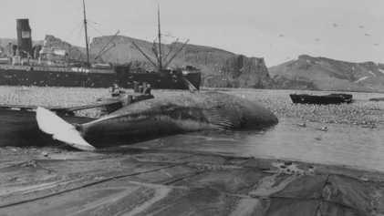 Galerie: Bilder aus 100 Jahren Geschichte einer antarktischen Vulkaninsel 2