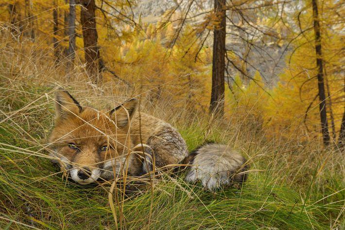 Begegnungen mit den Tieren in Italiens ältestem Nationalpark