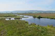 Das Naturschutzgebiet Großes Torfmoor im Kreis Minden-Lübbecke ist mit knapp 470 Hektar das größte verbliebene Moorgebiet ...