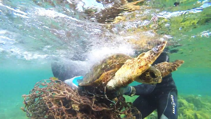 Seeschildkröte aus Fischernetz gerettet