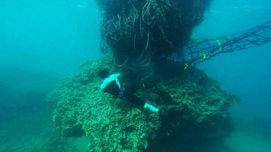 Monströses 11-Tonnen-Fischernetz bedrohte die Küste Hawaiis