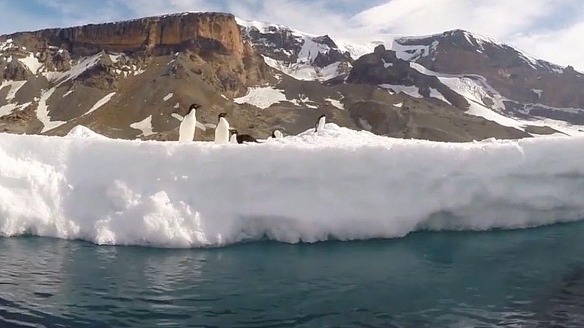 Auf dem Kajak zwischen Pinguinen in der Antarktis
