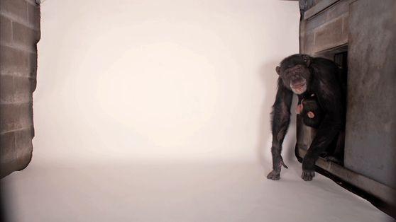 Photo Ark: 12.000 Tiere abzulichten, ist harte Arbeit