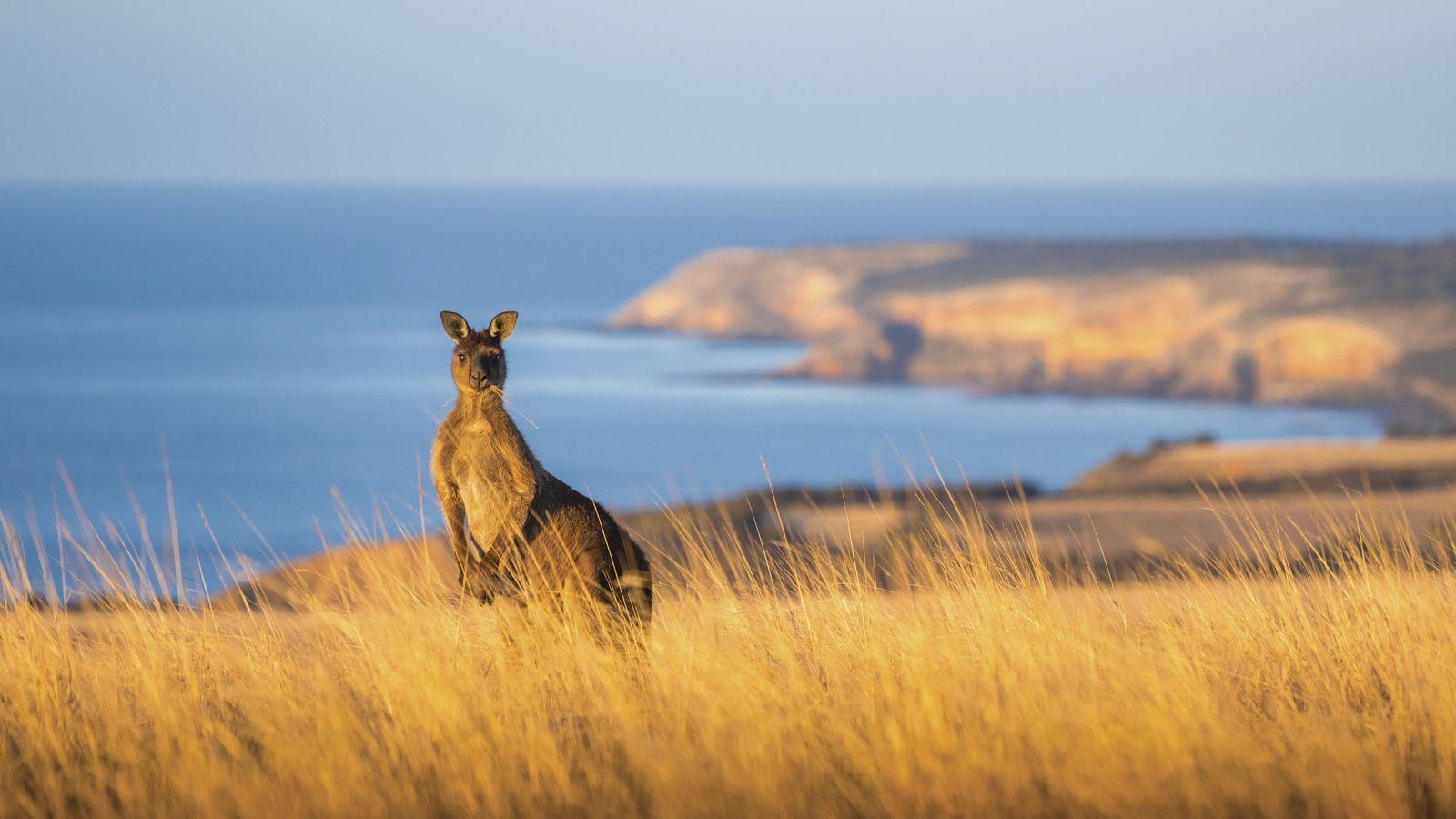 Tasmanien & Südaustralien: Die Reise kann beginnen ...