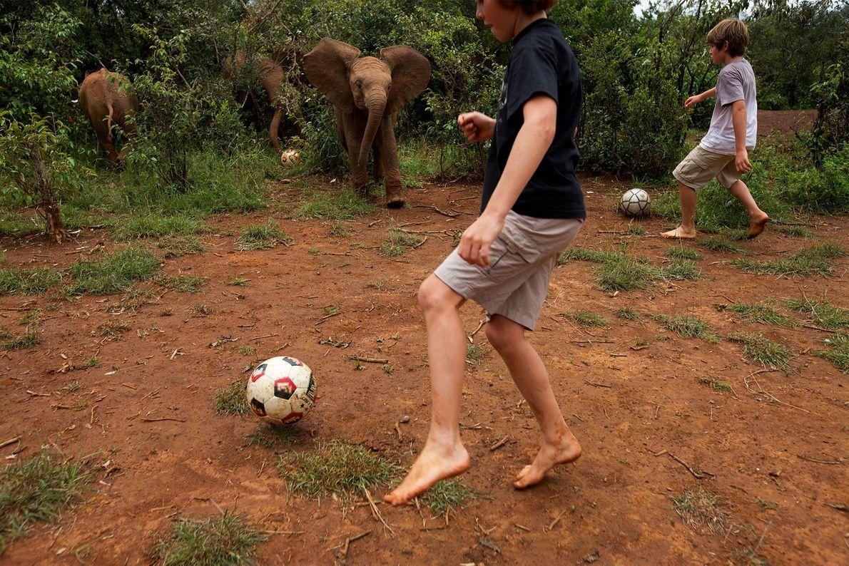 Zwei Kinder spielen 2010 im kenianischen Nairobi-Nationalpark Fußball mit zwei Elefantenwaisen.