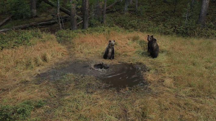 """EXKLUSIV: """"Bären-Badewanne"""" im Yellowstone-Nationalpark gefilmt"""