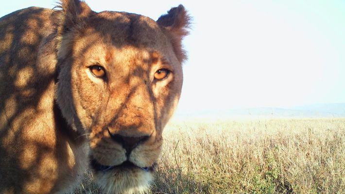 Tier-Selfies aus der Serengeti