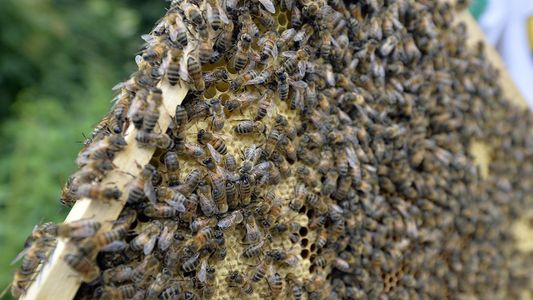 Wer geht freiwillig in einen Raum mit Millionen Bienen?