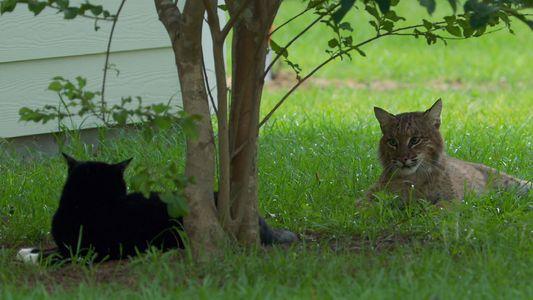 Furchtlose Katzen