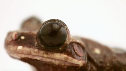 Photo Ark: Mit diesem Baumfrosch stirbt eine Art aus