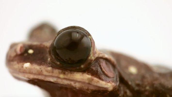 Fotoarche: Mit diesem Baumfrosch stirbt eine Art aus