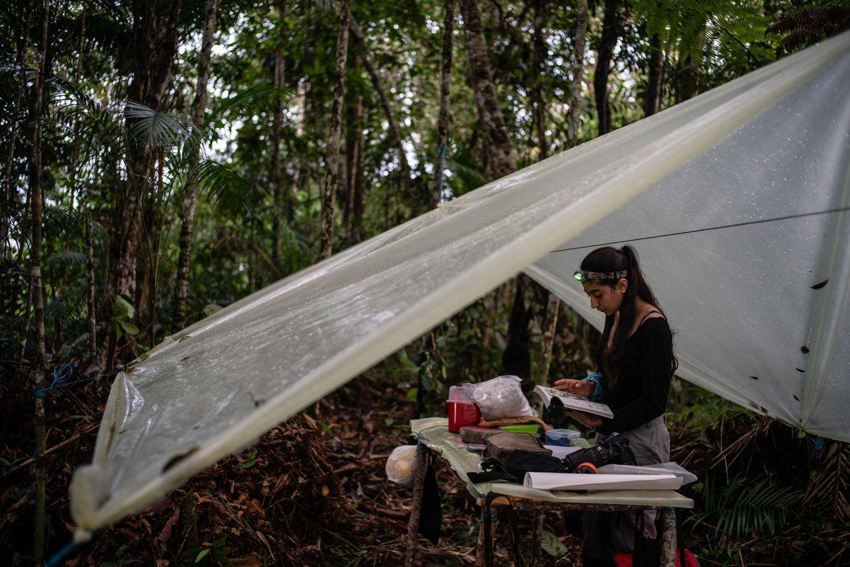 Die Ornithologin Maria Isabel Castaño arbeitet in einer provisorischen Vogelstation mitten im Wald.