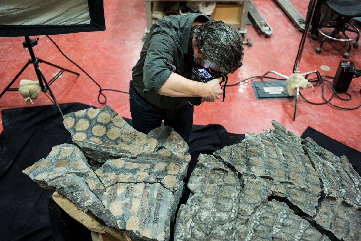 Fotograf Robert Clark fotografiert das Nodosaurusfossil