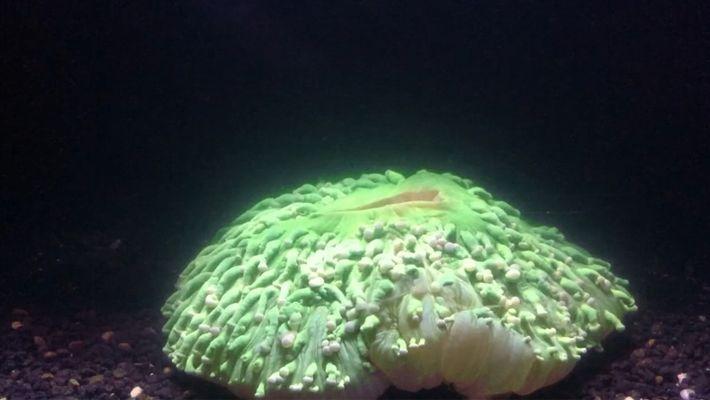 Ozeanerwärmung lässt Korallenriffe ausbleichen
